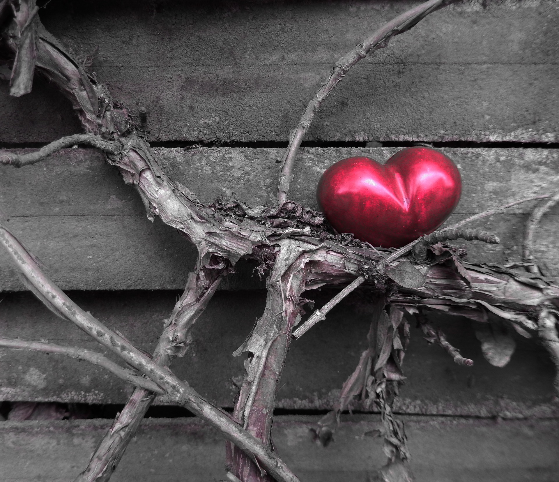 Love Among Thorns by Fedora